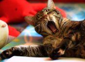 Receta casera para eliminar el mal olor provocado por nuestras mascotas