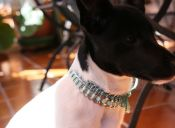 Voyce: El fabuloso dispositivo que protege a tu mascota