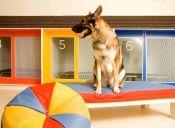 Hoteles para dejar a mi mascota mientras salgo de vacaciones