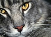 Gatos y sus dueños: ¿Cómo nos ven los mininos?
