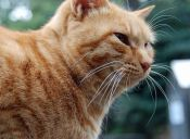Gatos con Alzheimer