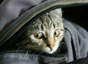 ¿Estás obsesionado con tu gato? Descúbrelo con estas 20 señales