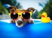 Altas temperaturas: ¿Cómo evitar los golpes de calor en mi perrito?