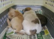 Historias de mascotas: rescate de mis perritos
