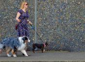 5 razones por las que no debes dejar de pasear a tu perrito