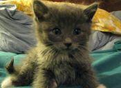 Cómo recibir a un nuevo gatito en casa: 5 tips claves
