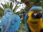 Las aves exóticas son las especies más traficadas en Chile
