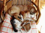 Perro o gato, ¿cuál elijo?