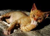 Pros y contras de las uñas de silicona para gatitos traviesos