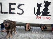 Marchas en todo Chile contra la Ley de Caza