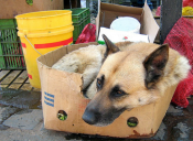 Feroz maltrato animal: perrita fue atacada con un hacha en Cartagena