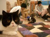 ¡Bienvenidos a los Cat Café!: La mezcla perfecta entre gatos y cafeína