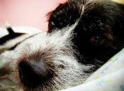 Los cuidados que debemos tener al dormir con nuestras mascotas