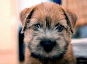 ¿Por qué inscribir a tu mascota en el Registro Civil?