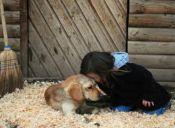 Nuevo decreto exige mayor seguridad para animales en Uruguay