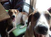 Historias de Mascotas: Mi perro me acompaña en todas