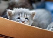 Leyendas de Internet: Los gatos Bonsái