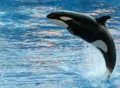 Parques acuáticos: La polémica que generó el documental