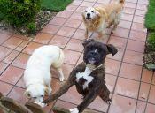Todo lo que debes saber sobre las Isapres para mascotas