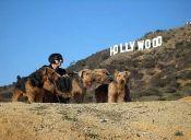 Animales trabajadores: ¿Qué hay detrás del éxito de las mascotas famosas?