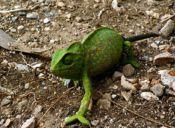 Roedores, loros y reptiles: Las enfermedades a las que nos exponen estas mascotas