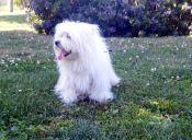10 lugares para disfrutar con tu mascota en el Gran Concepción