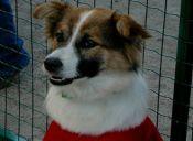 Chile se moviliza para ayudar a los animales afectados tras el terremoto del Norte