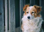 Tips para cuidar el pelaje de tu perro