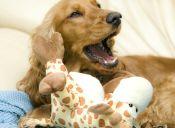 ¿Por qué bostezan los perros?