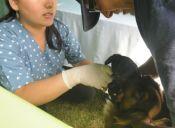 ¡Atención Providencia!: Vacunación gratuita para perros y gatos este 11 de abril