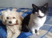Protocolo para mascotas en caso de emergencias: ¡Una tarea pendiente!