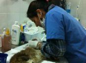 Veterinaria Paola Carmona: Puro amor por los animales