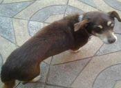 Francia se suma a lucha contra el maltrato animal y aprueba ley de protección a mascotas