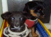 Proyecto de ley busca castigar con multas y cárcel el abandono animal en Chile
