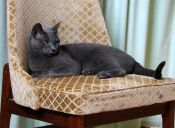 Increíble casa diseñada especialmente para gatos