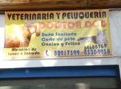 Al menos cinco perritos murieron en Isla de Maipo tras cirugías de veterinario falso