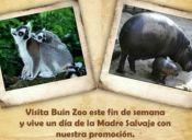 Buin Zoo invita gratis a las mamás a celebrar su día en una