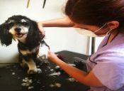 Cortes para perros en invierno: Tendencias, cuidado e higiene