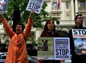 Animalistas en acción: 10 hitos por la defensa animal