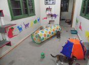 Edupet: Centro de psicólogos caninos y felinos para educar a tu mascota