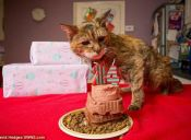 ¡Record Guinness! La gata más vieja del mundo cumplió 24 años