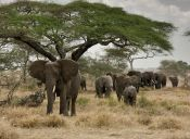 Leonardo DiCaprio donó un millón de dólares para luchar contra la caza de elefantes