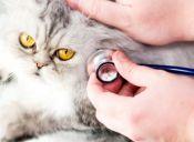 Llevar a tu mascota al veterinario