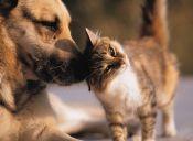Historia de amistad entre un perro y un gato