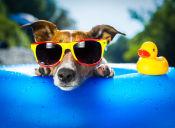 Los fuegos artificiales y el estrés en nuestras mascotas