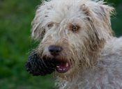 Higiene dental de tu mascota: Tan importante como la tuya