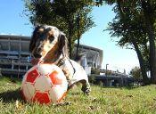 Los animales también podemos jugar a la pelota
