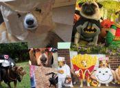 Halloween: ¡Los perros también se disfrazan!