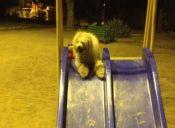 Los mejores lugares para pasear a tu perro
