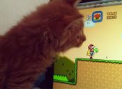 ¿Por qué a mi gato le gusta perseguir los punteros láser?